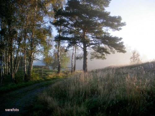 Furans kulle i morgonbräcken