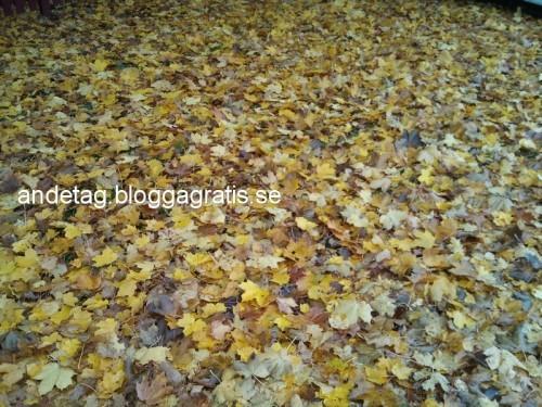 å så lite mer löv