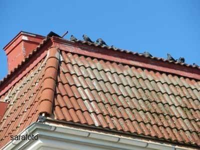Kajorna skrattade åt oss från taket;)