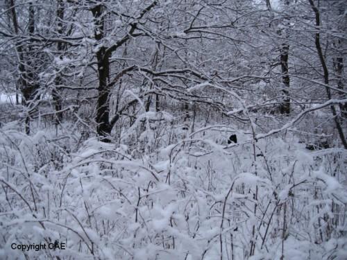 Lingvallenskogen
