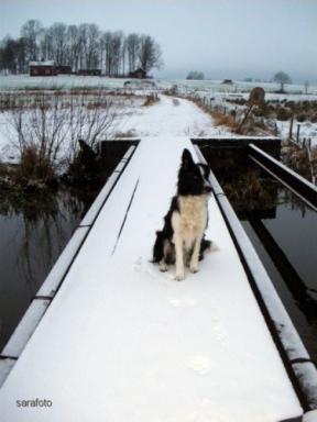 Ludde på nysnöad bro