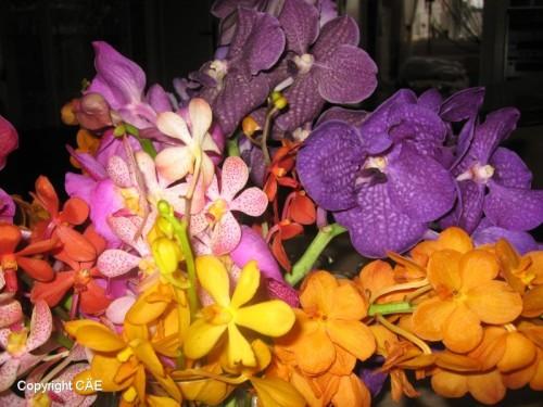Orkidéer från Bangkok