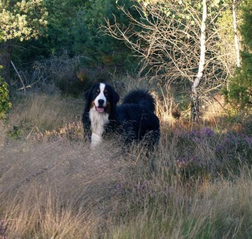Michu i skogen