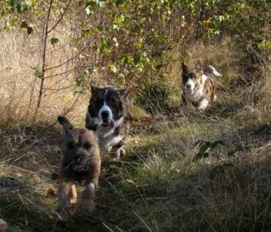Pyret, Tiger & Bilbo
