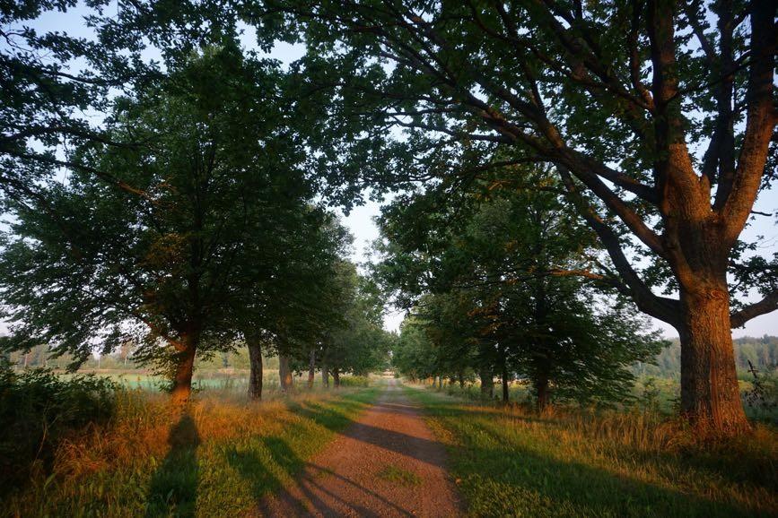 Träd ger mig mycket energi och livskraft.