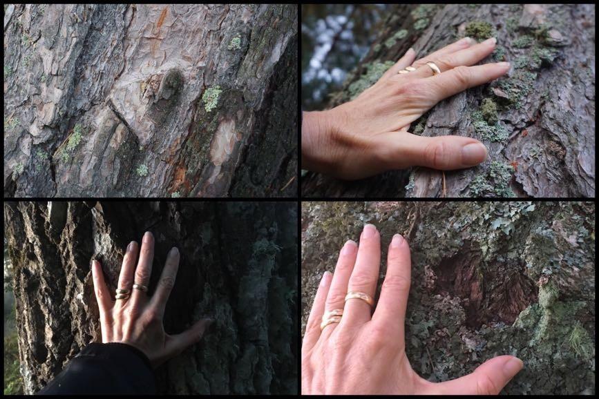 Ta i träd. Träd är läkande - Friskare av naturen
