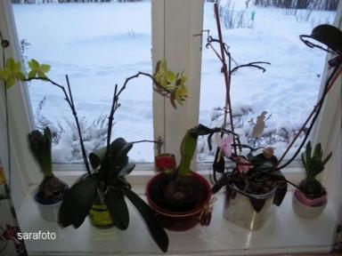 Köksfönstret blommar mot väster