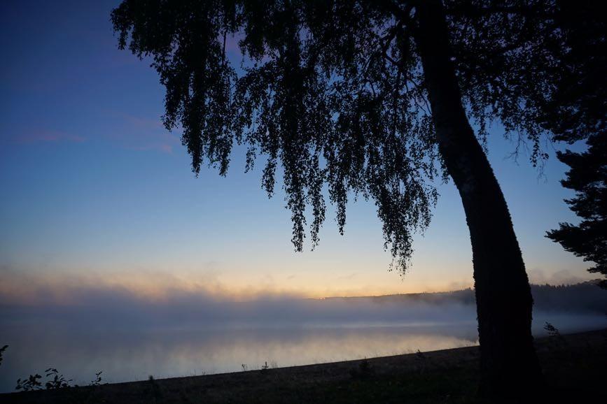 Träd och soluppgång är läkande - Friskare av naturen