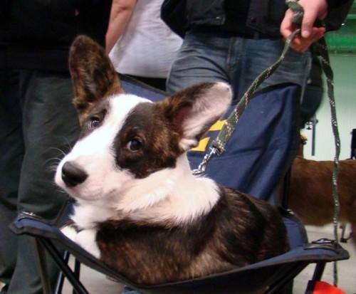 Belle vilar skönt i stolen