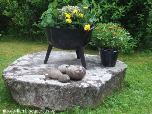 gråda, blommor på sten