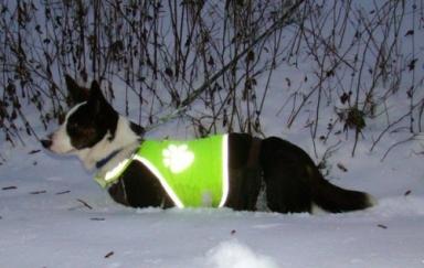 Holly i djup snö