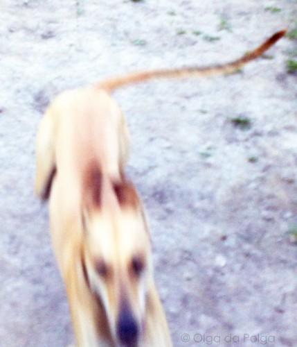 sandhund !