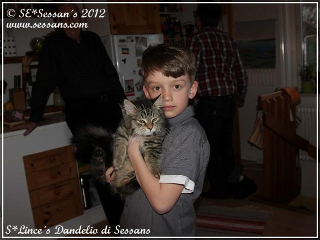 Sibirisk katt S*Lince´s Dandelio di Sessans