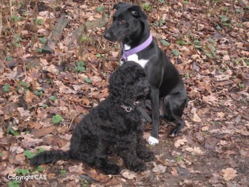 Chili och Nellie
