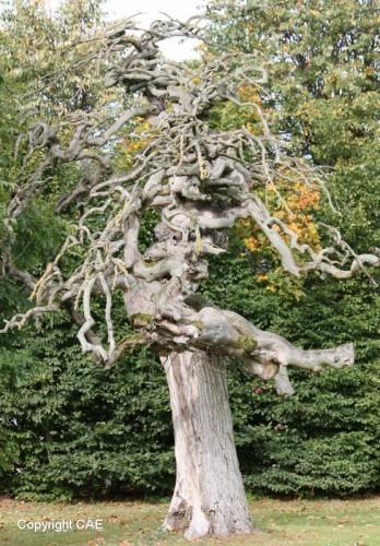 Dött träd