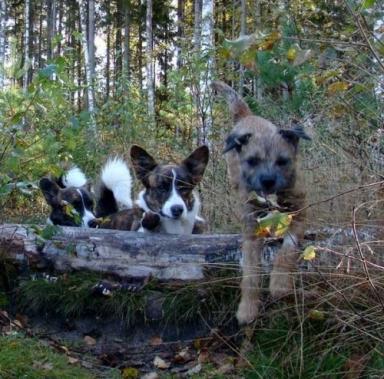Tiger & Bilbo tittar på Pyrets hopp