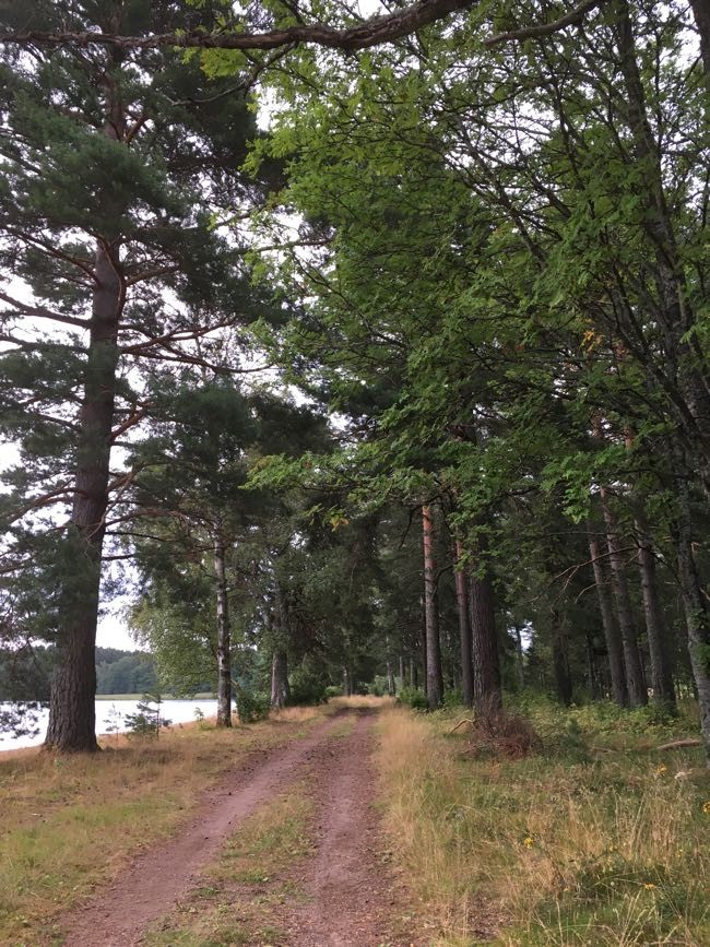 Träd ger energi