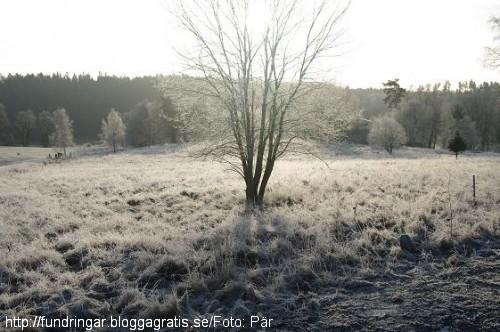 Decemberfrost