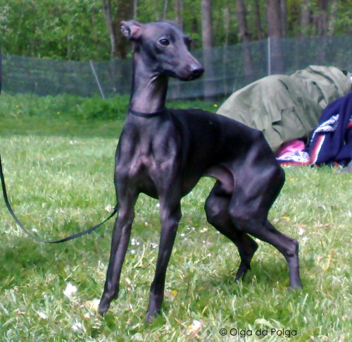 Py`s Lemetto, Malin- kennel Rashikas