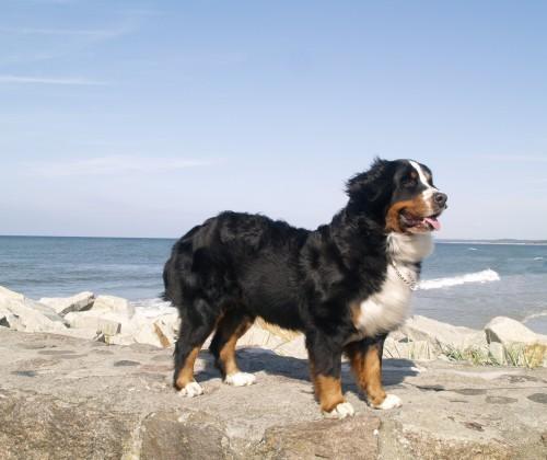 Siri vid havet