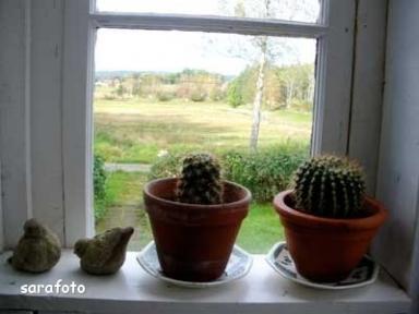 Kaktusarna år 2009