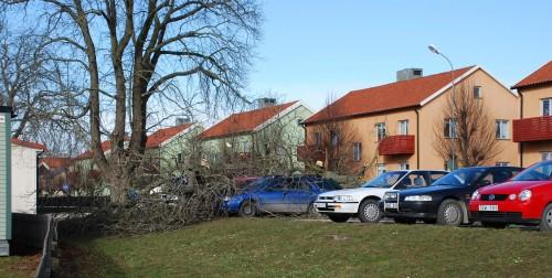 Vår bil stod bara några meter bort från trädet, den svarta bilen till höger på bilden.