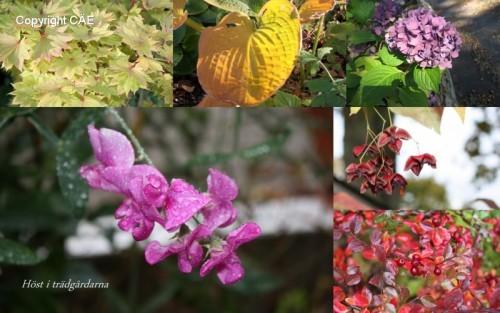 Höst i trädgårdarna