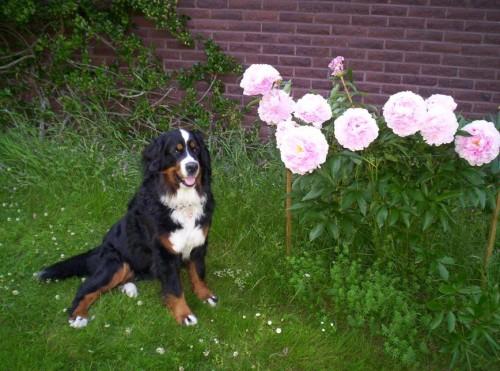 En vacker blomma bland andra vackra blommor