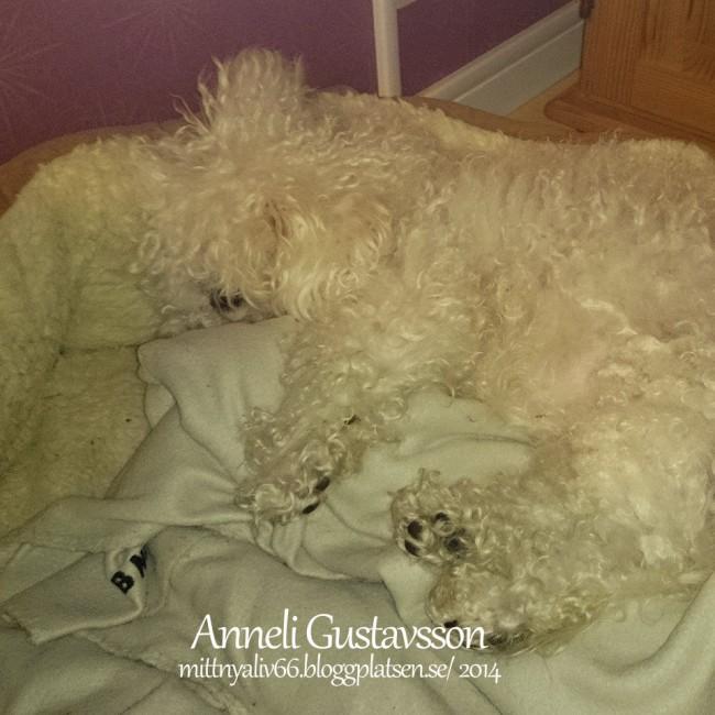Jag hade inte sällskap i sängen inatt / Foto