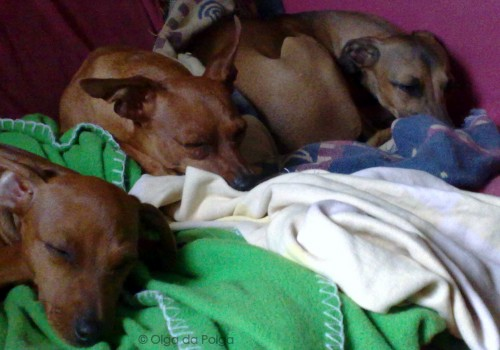 tre sovande flickor