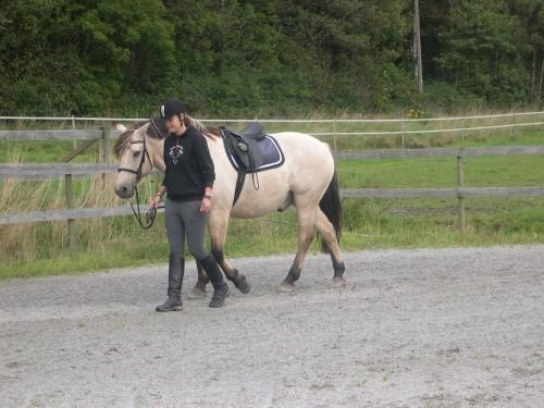 Häst och ryttare kommunicerar
