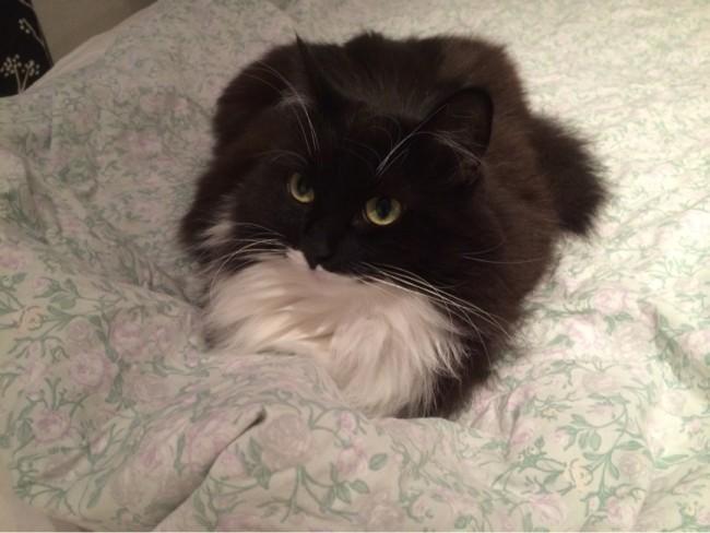 Lilla Luna inspekterar att jag gör rätt när jag bäddar sängen