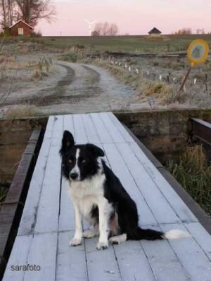 Ludde sitter på frostig bro