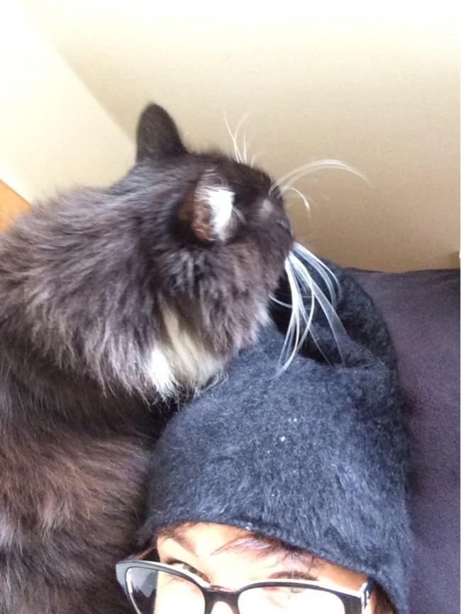 Kissen Luna är mycket förtjust i min korthåriga mössa.