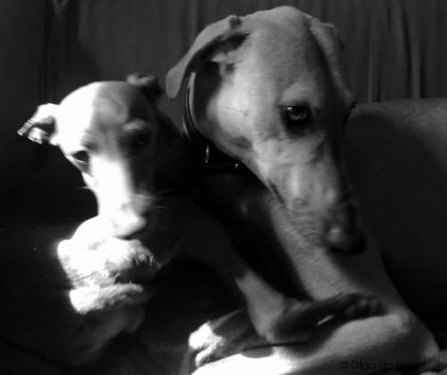 Dino och Balto