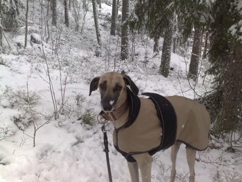 snönos