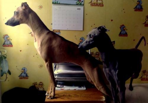 Dino och Dorinda spanar