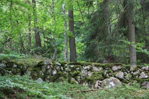 Skogen var så vacker