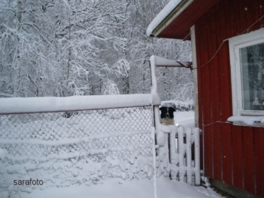 Ludde kikar fram i hundgården